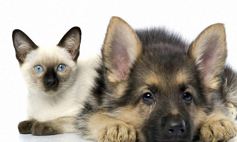 Разница между любителями кошек и любителями собак.