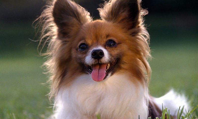 Здоровые породы собак