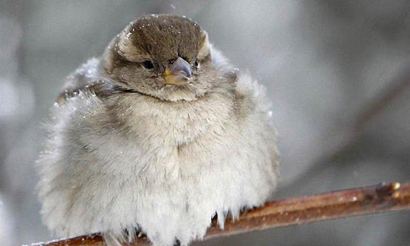 Как помочь животным пережить эту зиму.