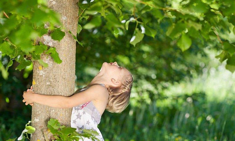 Сохранение деревьев