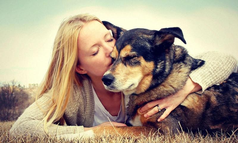 Волонтёрство с животными