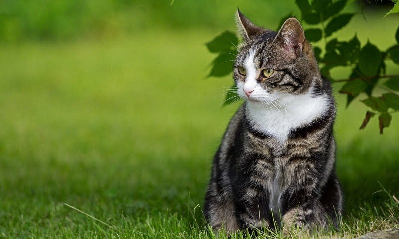 Почему кошка виляет хвостом?