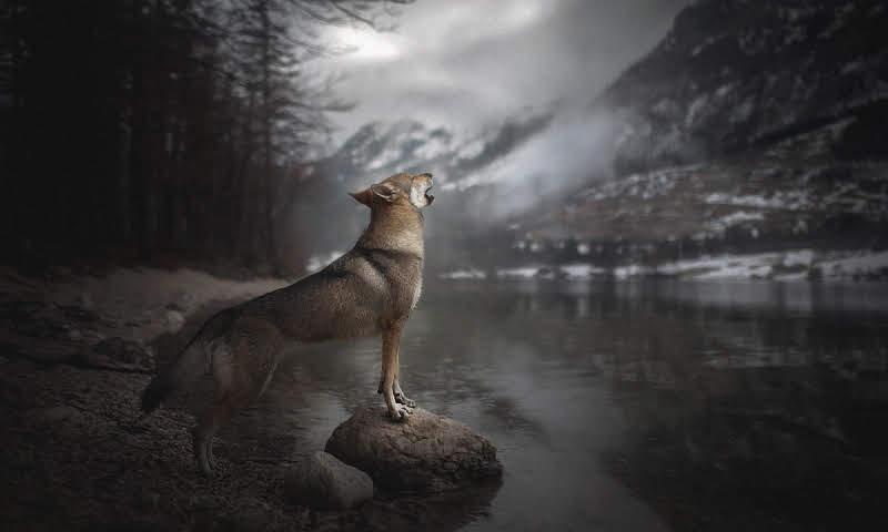Воет собака